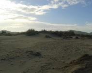 Poseidonia sulle dune di Porto Pino