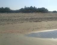 Posidonia sulle dune di Porto Pino