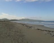 Posidonia sulla spiaggia di Porto Pino