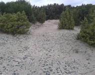Vegetazione sulla spiaggia di Porto Pino
